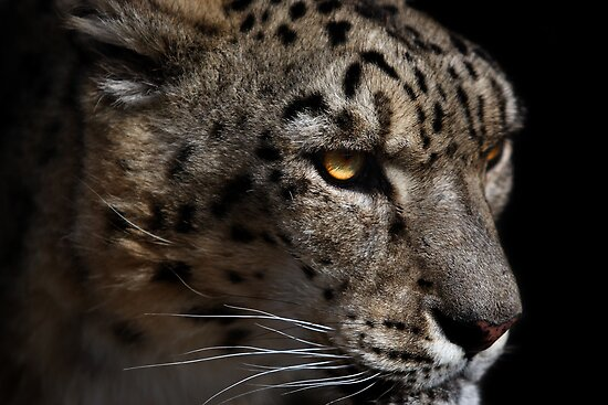 On The Prowl by Bobby McLeod