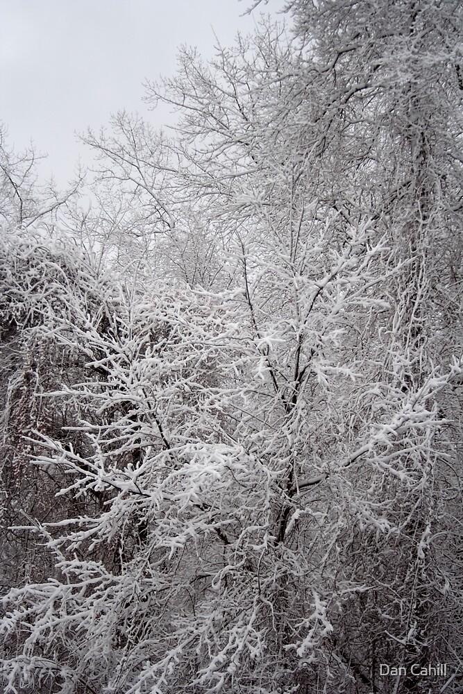 Recent Snow Serie: Snowfall IX by Dan Cahill