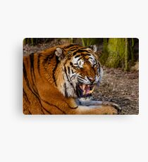 Siberian Tiger roar Canvas Print
