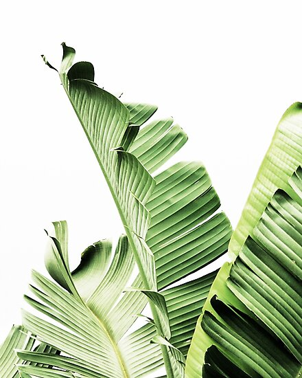 Quot Banana Leaves Tropical Leaves Green Leaves Leaf Modern