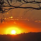 Cootamundra Sunset by GailD