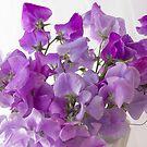 Lavender Sweet Peas by Sandra Foster