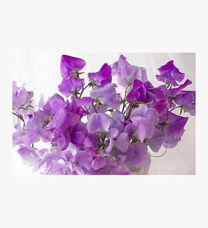 Lavender Sweet Peas Photographic Print
