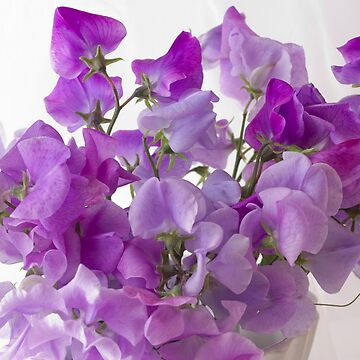 Lavender Sweet Peas by SandraFoster