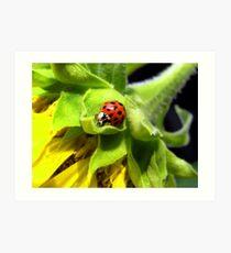 Ladybug on Sunflower Art Print