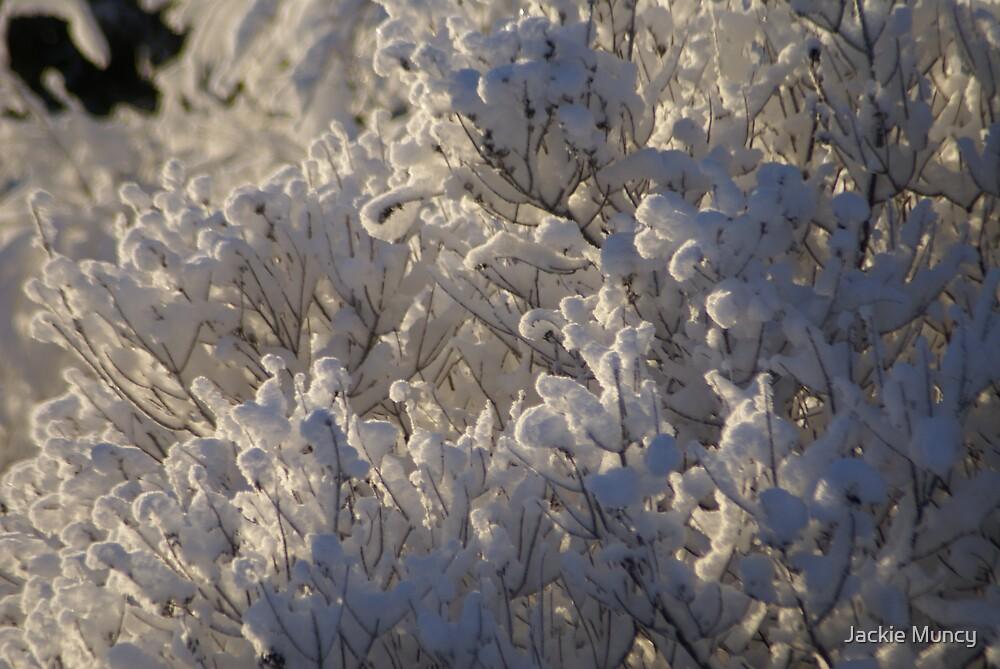 Frozen in Place by Jackie Muncy