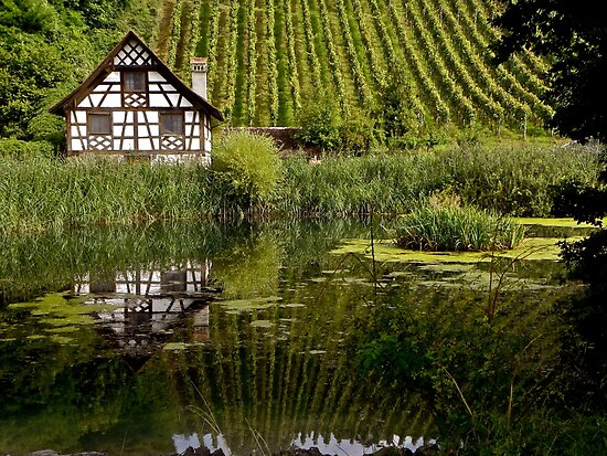 house by the pond by mamba