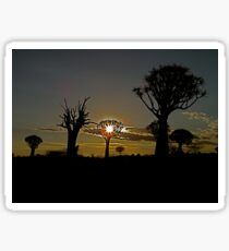 living and dead quiver trees in the setting Namibian sun Sticker