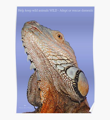 "THINK LIZARDS: ""Help keep wild animals WILD- Adopt or Rescue domestic"" Poster"