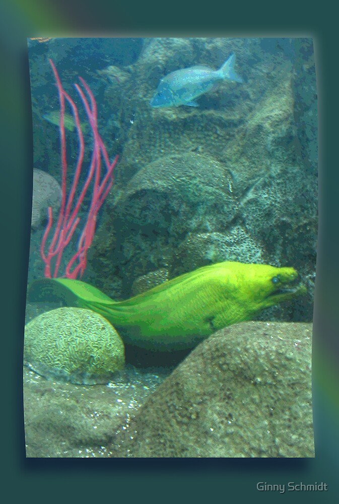 That's a Moray by Ginny Schmidt
