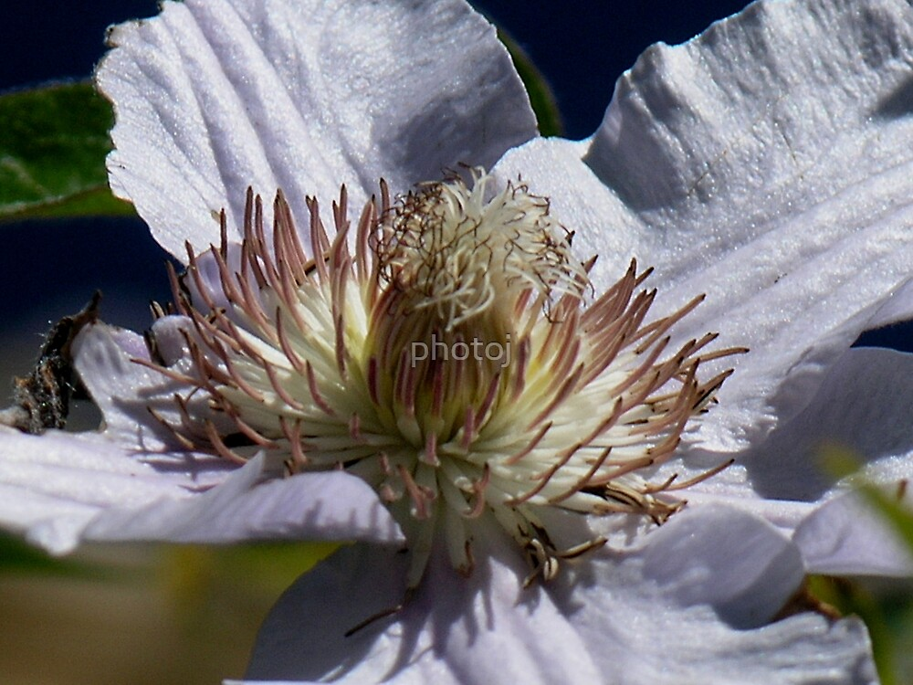 photoj floral by photoj