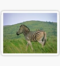 Burchells zebra Sticker