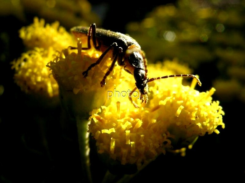 photoj Macro Bug by photoj