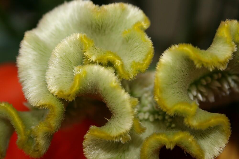 Rubens Flowers 3 by Owen Cheek