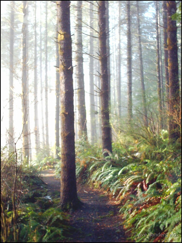 Sun Lit Forest Trail by Dave Sandersfeld