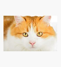 Clever cat Photographic Print
