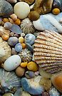Sea Shells a plenty by thatstickerguy