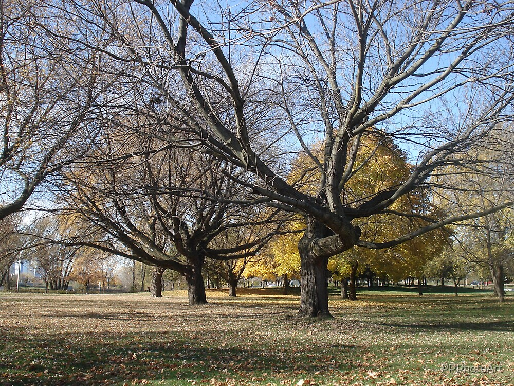 Tree Shapes by PPPhotoArt