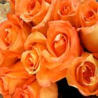 BEAUTIFUL PEACH ROSES by WhiteDove Studio kj gordon