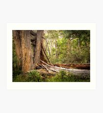 Trees in the Grampians, Victoria Art Print