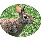 My backyard Bunny by little1sandra