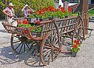 Geranium Cart by Graeme  Hyde