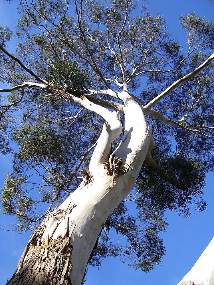 curvy tree by gaylene