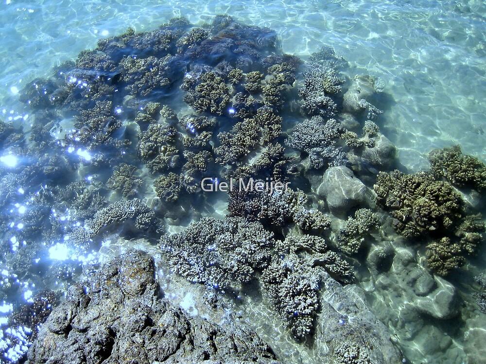 crystal clear water reef by Giel Meijer