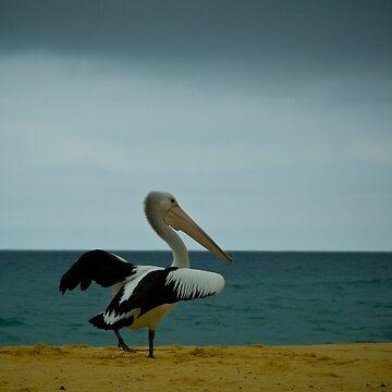 Mr Pelican by HoaK