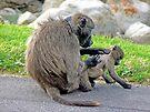 Baboon Grooming by Graeme  Hyde