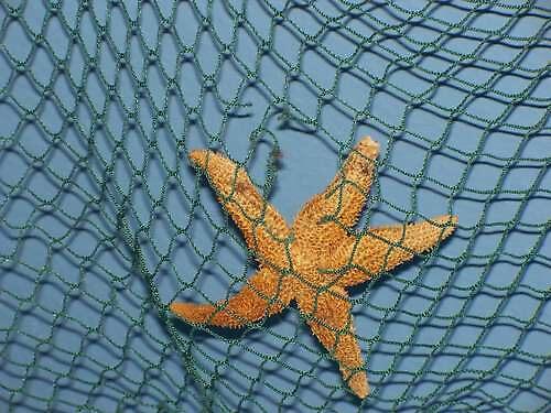starfish by cherlene50