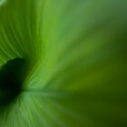 Wave of Green by Clare Colins