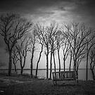 Bench   Sands Point, New York by © Sophie W. Smith