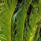 Sago Palm by Thad Zajdowicz