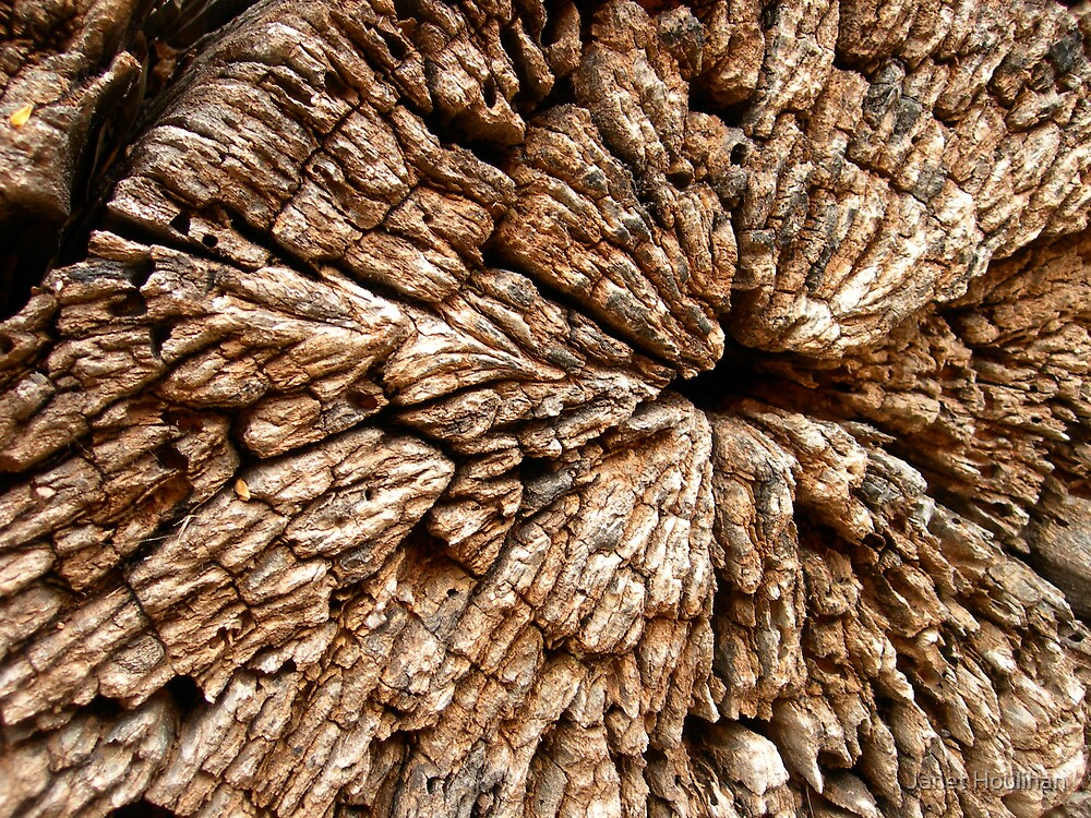 Weathered Stump by Janet Houlihan