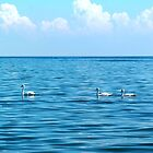 Swans on Lake St. Clair by Thomas Burtney
