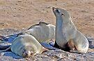 Cape Cross Fur Seals. by Graeme  Hyde