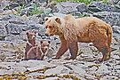 Watching the twins by Graeme  Hyde