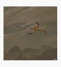Quetzalcoatlus Photographic Print
