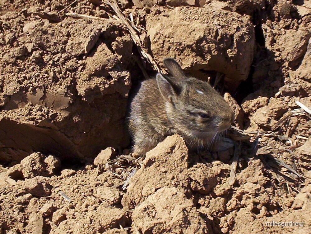 baby rabbit by milesandrew