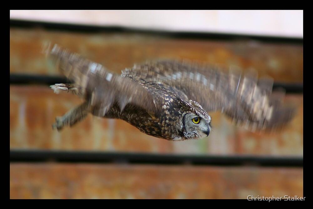 owl by Christopher Stalker
