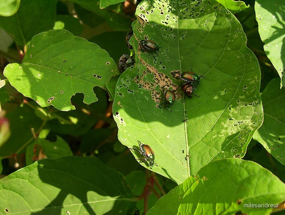 beetle mania by milesandrew