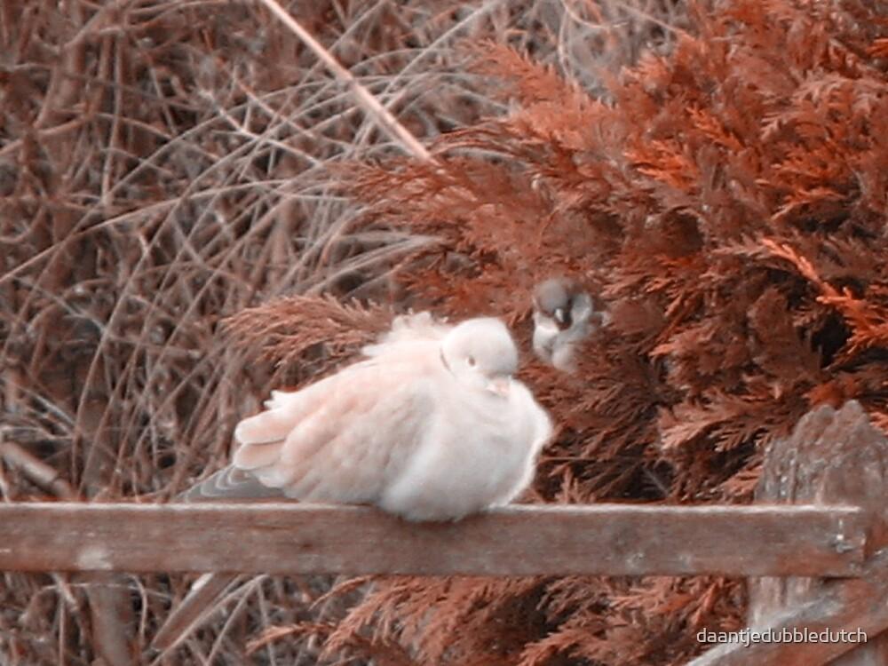 two birds in the hedge by daantjedubbledutch