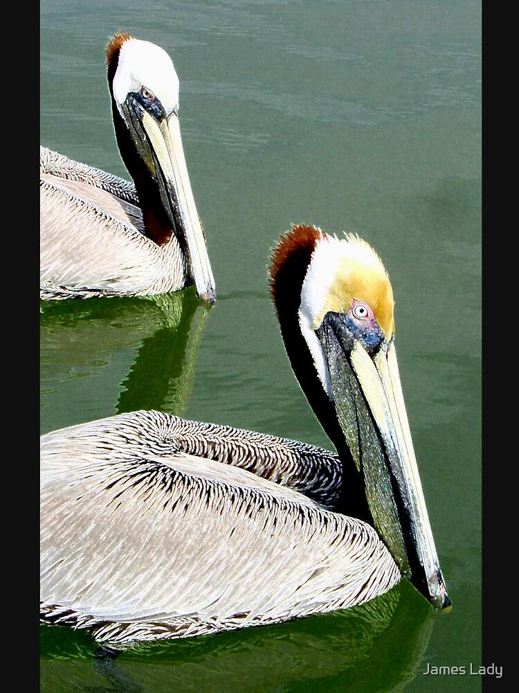 American Brown Pelicans by jlady