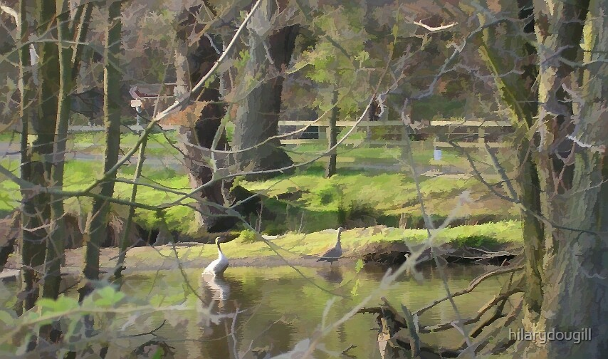 Duck's Haven by hilarydougill