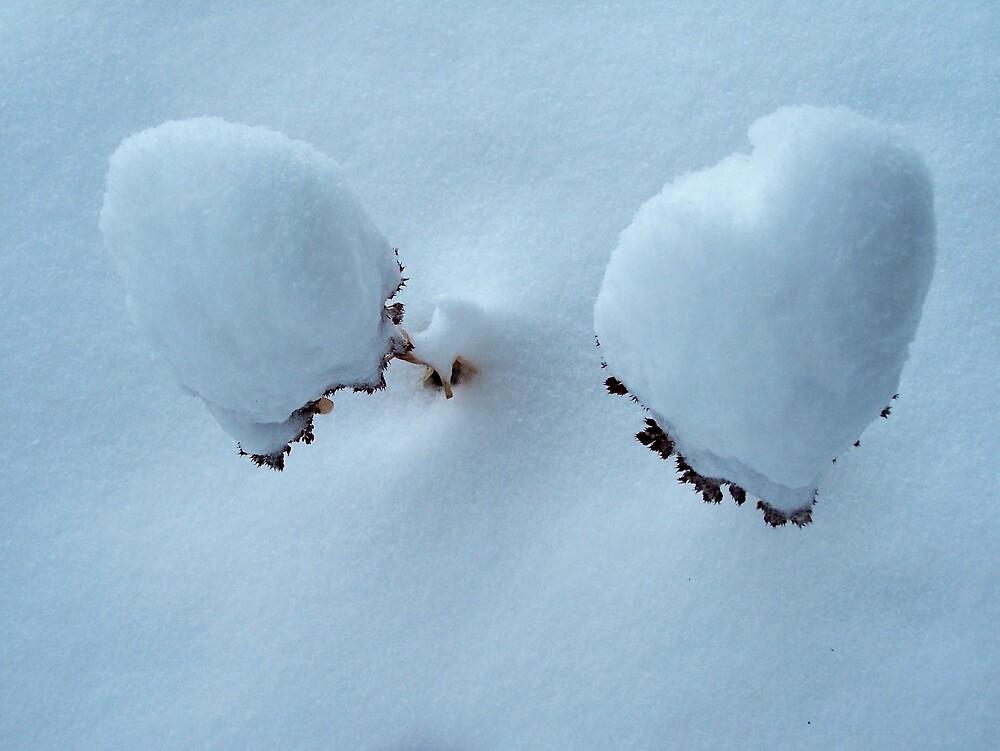 Snow Cones by Gene Cyr