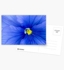 Blue pansy Postcards
