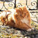 Sunshine Kitty by Susie Peek