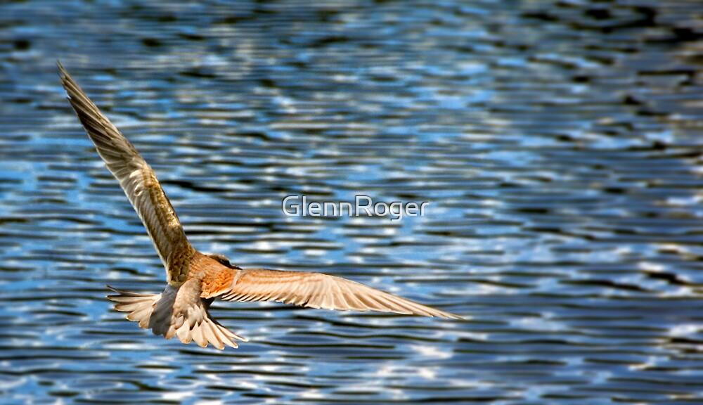 Glide by GlennRoger