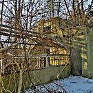 The Overrun Greenhouse by Jane Neill-Hancock